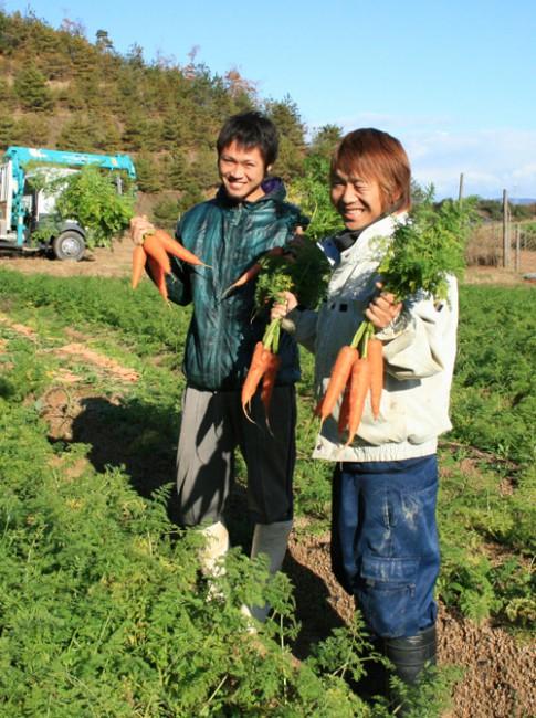 京都 洋人参収穫