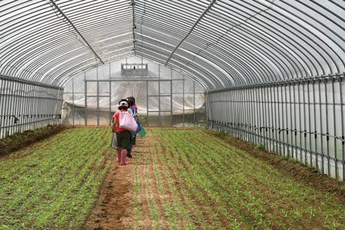 農業見学授業