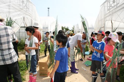 ねぎ収穫体験授業